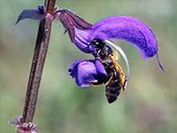 Beziehungen Pflanzen–Insekten